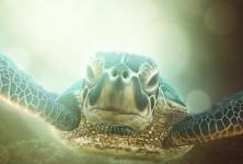 just da turtle